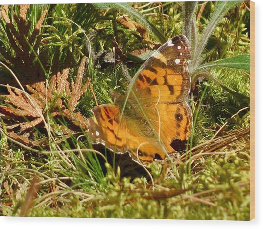 Butterfly In The Forest Wood Print