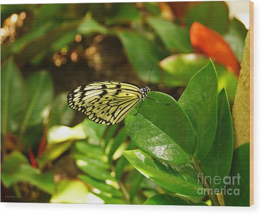 Butterfly In Yellow And Black Wood Print