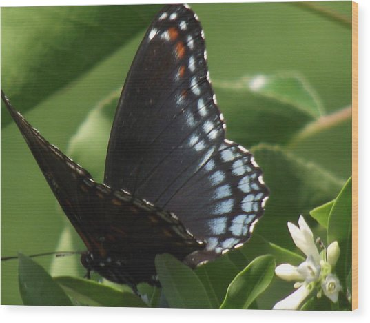 Butterfly Wood Print by Katherine Woods