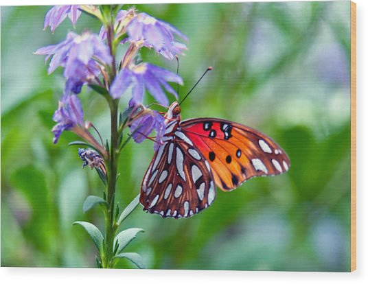 Butterfly Wood Print by Linda Pulvermacher