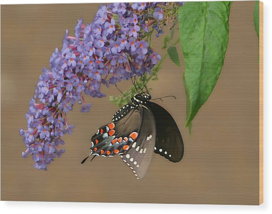 Butterfly Looking Up Wood Print by Daamonturne