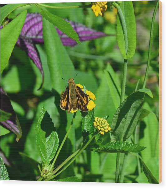 Butterfly Wood Print by Mark Bowmer