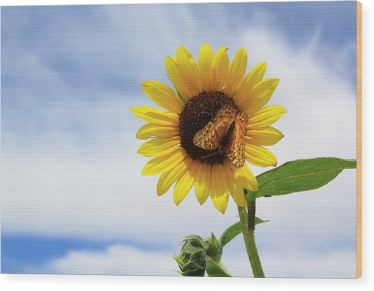 Butterfly On A Sunflower Wood Print