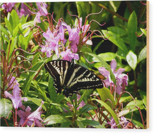 Butterfly On Flowers Wood Print by Mark Caldwell