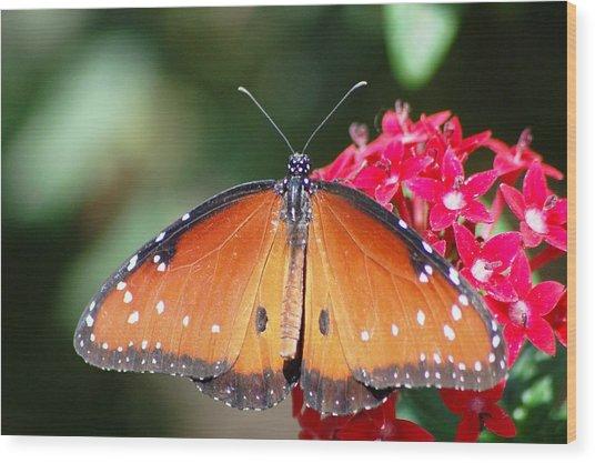 Butterfly On Pink Flower Wood Print by Meeli Sonn