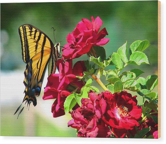 Butterflyrose Wood Print