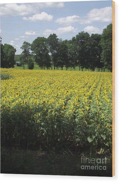 Buttonwood Farm Wood Print