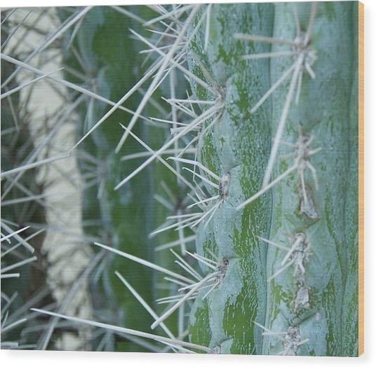 Cactus Close Wood Print by Dietrich Sauer