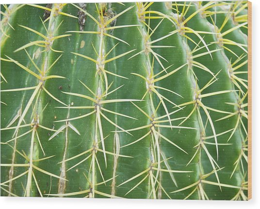 Cactus Close Trouble Wood Print by Dietrich Sauer
