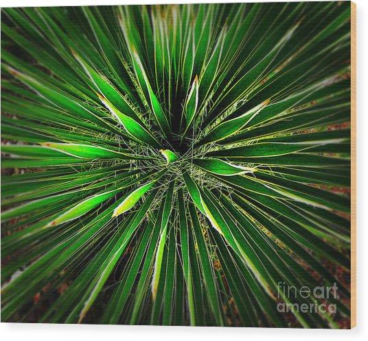 Cactus Explosion Wood Print