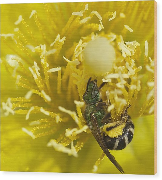 Cactus Flower And Bee Wood Print