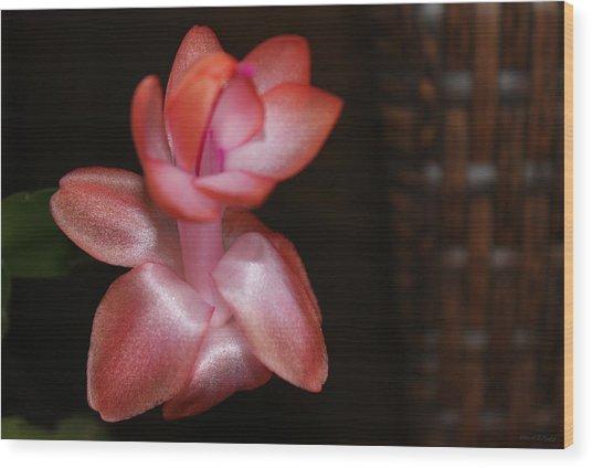 Cactus Wicker Wood Print