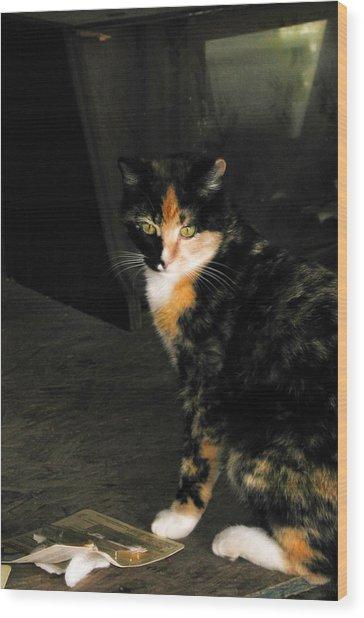 Calico Cat Wood Print