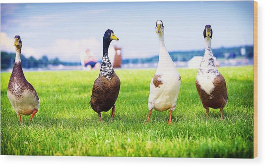 Calico Duck Quartet Wood Print by Vicki Jauron