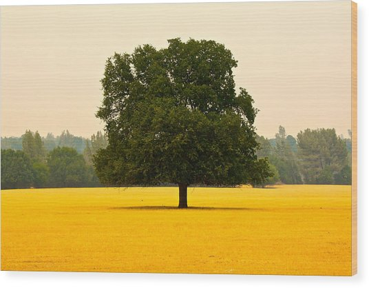 California Oak Wood Print