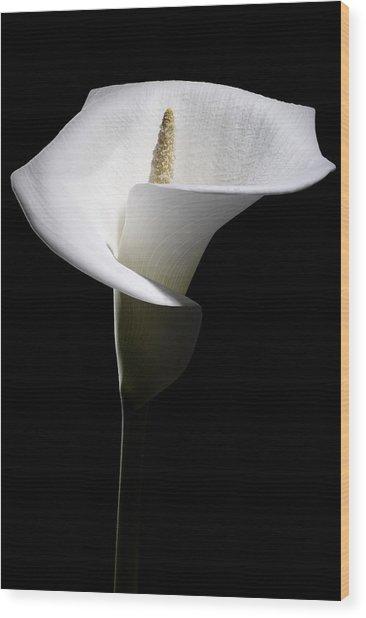Calla Lily Wood Print by Nathaniel Kolby