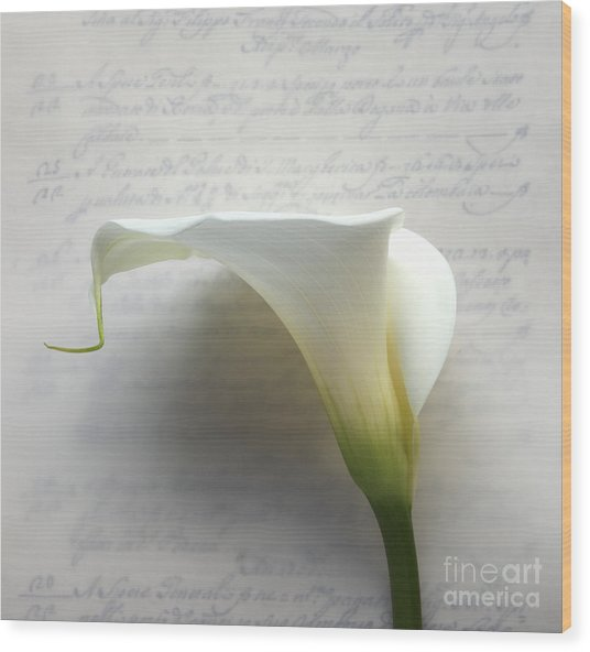 Calla Lily On Old Script Writing Wood Print by Ruby Hummersmith