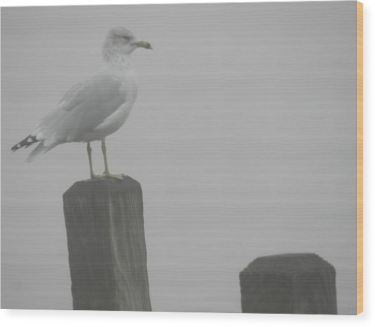 Camouflaged Seagull Wood Print by Dennis Leatherman