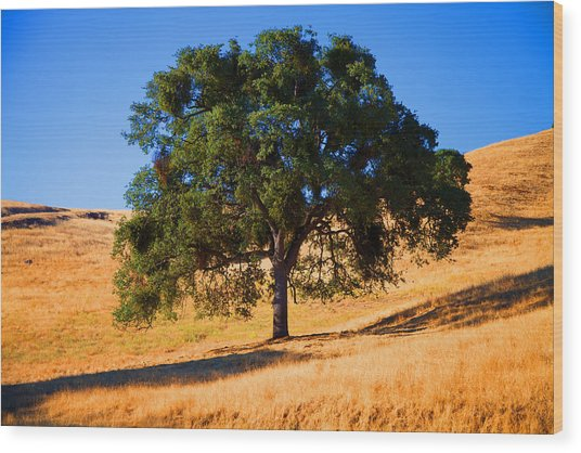 Campo Seco Tree Wood Print by Joe Fernandez