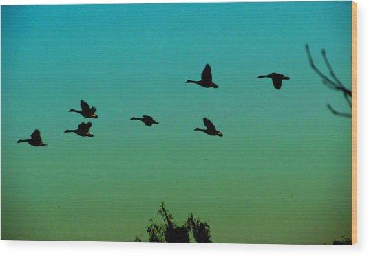 Canadian Geese In Flight Wood Print by David Killian