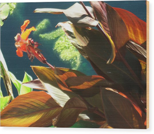 Canna Lily And Water In San Angelo Civic League Park Wood Print