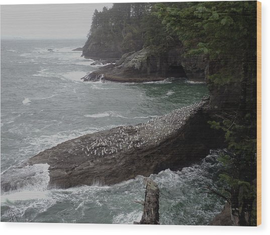 Cape Flattery Shoreline Wood Print by Fred Russell
