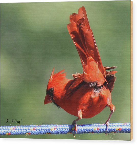 Cardinal-a Picture Is Worth A Thousand Words Wood Print