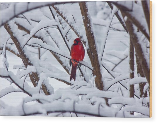 Cardinal In The Snow 2 Wood Print by Barry Jones