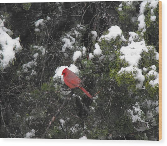 Cardinal In The Snow Wood Print by Rebecca Cearley