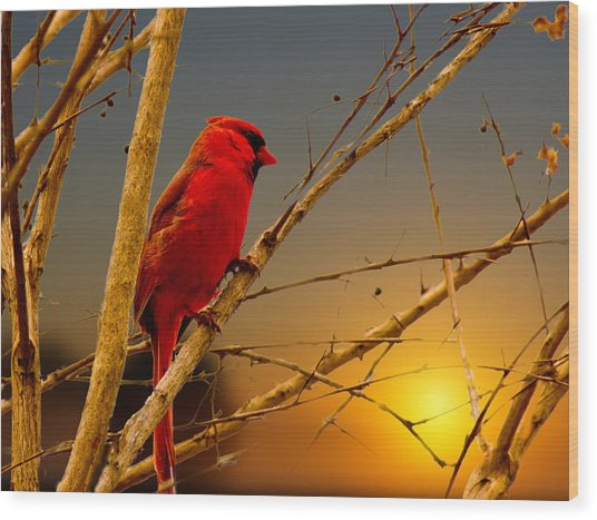 Cardinal Sunrise Wood Print by Barry Jones
