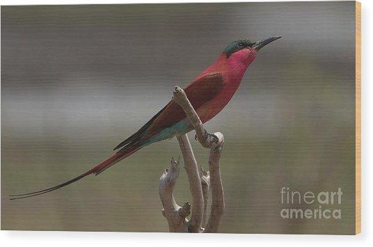 Carmine Bee-eater Wood Print