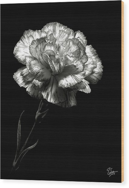 Carnation In Black And White Wood Print