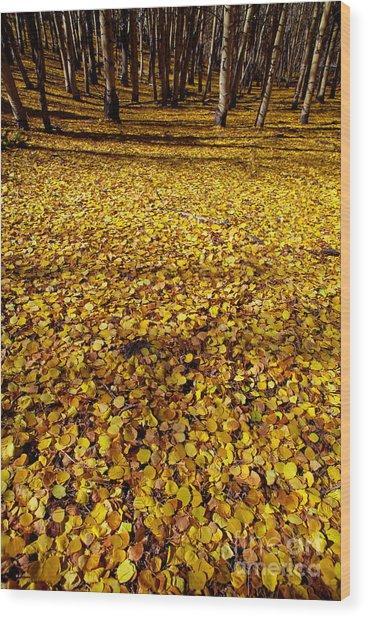 Carpet Of Aspen Leaves Wood Print