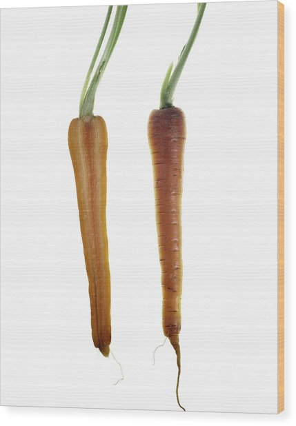 Carrot Wood Print by Nathaniel Kolby