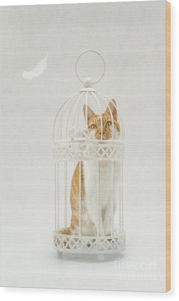 Cat In A Birdcage Wood Print by Catherine MacBride