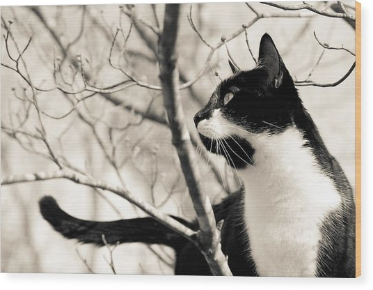 Cat In A Tree In Black And White Wood Print