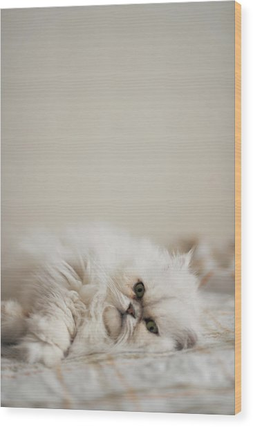 Cat Lying In Bed Wood Print