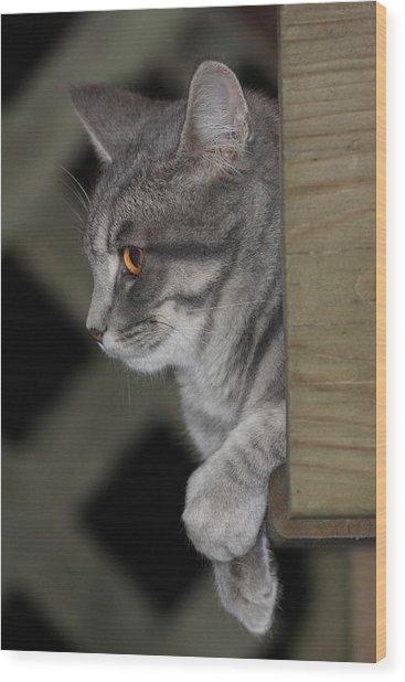 Cat On Steps Wood Print