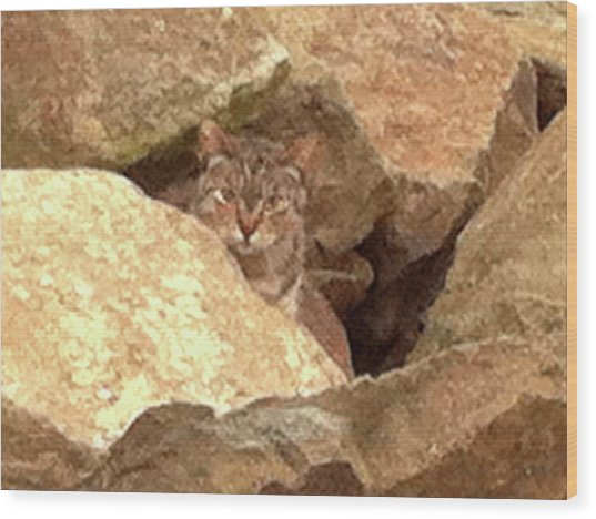 Cat On The Rocks Wood Print