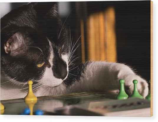 Cat Playing A Game Wood Print