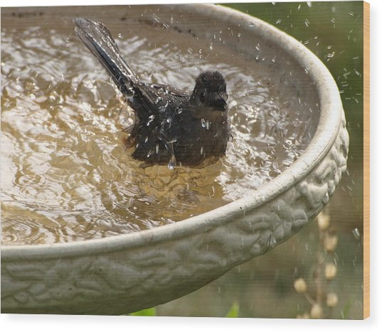 Catbird Bath - 2 Wood Print