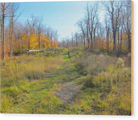 Catskill Ski Run In Late Autumn  Wood Print