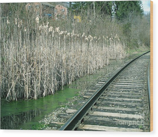 Cattails By The Tracks Wood Print