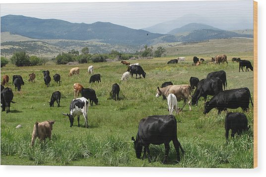 Cattle Country Wood Print by Daniel Dodd
