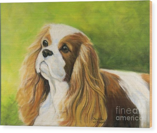 Cavalier King Charles Spaniel  Wood Print by Charlotte Yealey