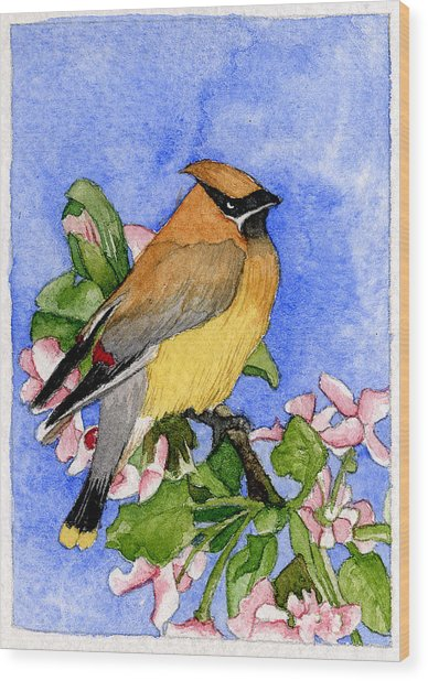 Cedar Waxwing In Spring Wood Print by Eunice Olson