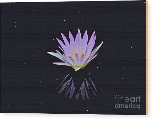 Celestial Waterlily Wood Print
