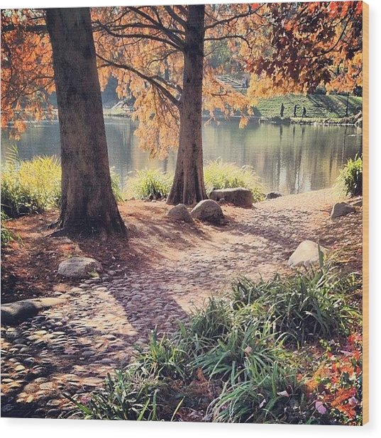 Central Park Early Morning Wood Print