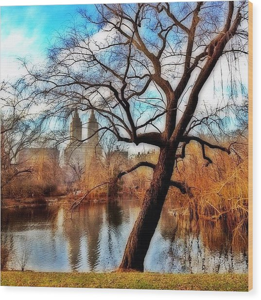 #centralpark #park #outdoor #nature #ny Wood Print