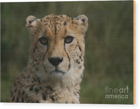 Charlie The Cheeta Wood Print by Carol Wright